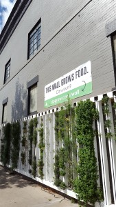 The farmwall at Altitude Chophouse & Brewery in downtown Laramie.